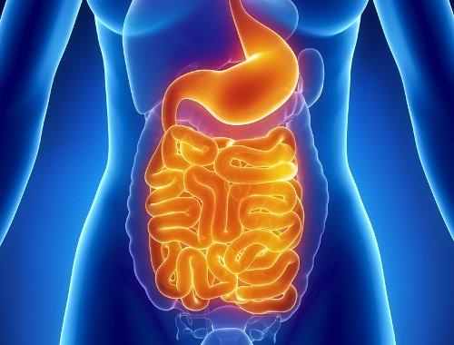 imagen ¿Por qué es tan importante la flora intestinal?